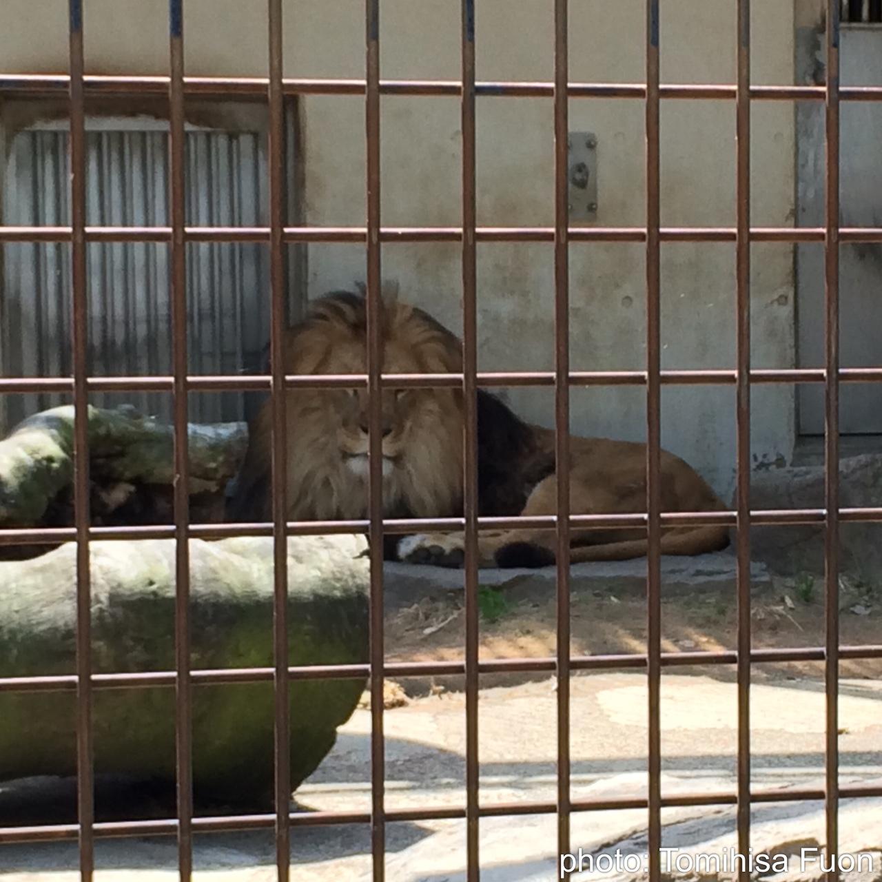 茶臼山動物園>
